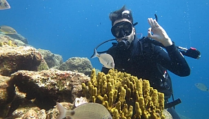 Kaptan Cousteau'nun Kuzey Kızıldeniz'i Destek Bekliyor
