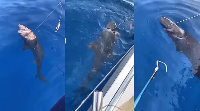Amatör balıkçıların oltasına takılan köpek balığı ağzındaki kanca çıkartılarak serbest bırakıldı