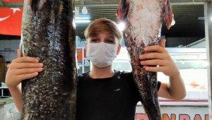 Bir buçuk metrelik yayın balıklarına büyük ilgi