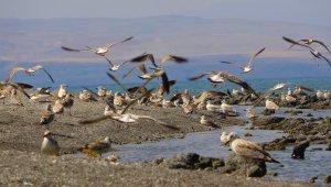 Van Gölü kıyıları martı ölümlerinden tamamen temizlendi