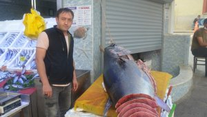 320 kiloluk dev orkinos görenleri şaşkına çevirdi