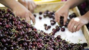 Ege Bölgesi'nde tarım ürünleri ihracatında zirve el değiştirdi