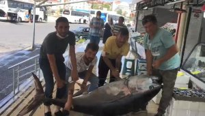 Marmara'da dev orkinos balığı yakalandı