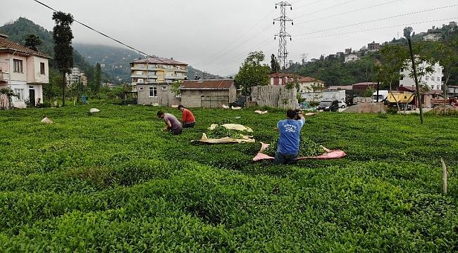 Pandemi nedeniyle Gürcü çay işçileri Rize gelemeyince 'Yevmiyecilik' bir sektör haline geldi
