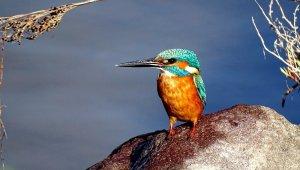 Pek çok kuş ve bitki türünü barındıran Alaçatı Sulak Alanına bilgilendirme panoları