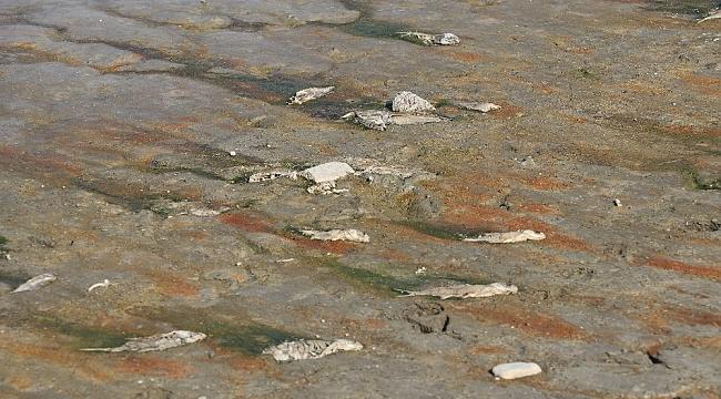 Amasya'da barajlardaki su miktarı dip yaptı, balıklar ölüyor