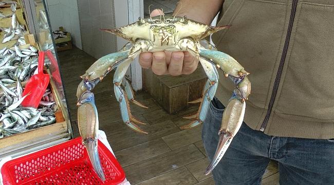 Balık için Karadeniz'e açıldılar ağa takılanı görünce şaşkına döndüler