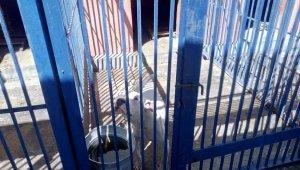Tehlikeli ırk köpek besleyen 3 kişiye 38 bin TL para cezası