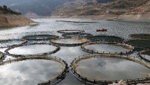Denizi olmayan Gümüşhane'den Somon ihraç ediliyor