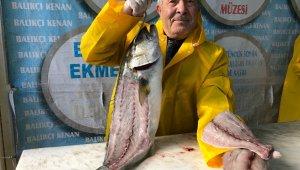 Denizlerde kofana balığı bereketi: Fiyatı 200 liradan 80 liraya düştü
