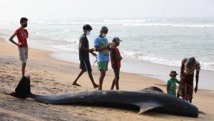 Sri Lanka'da kıyıya vuran 120 balina kurtarıldı