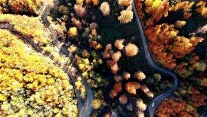 Türkiye'nin en büyük blok ormanlarını barındıran Yenice'de sonbahar güzelliği