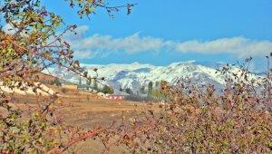 Yüksekova'da karla gelen sonbahar güzelliği