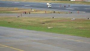 Trabzon Havalimanı'nda pist aydınlatma sistemleri yenileme çalışmaları sona erdi