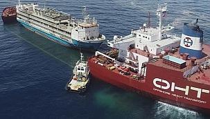 AMSA canlı hayvan taşıma gemisine 24 ay ceza verdi!