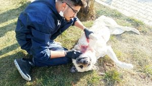 Boğazından yaralı halde bulunan köpek sokak ortasında ameliyat edildi