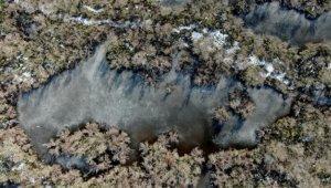 Buz tutan longoz ormanları görenleri büyülüyor