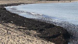İstanbulluların akın ettiği sahil çöp yuvasına dönerek kızıla boyandı
