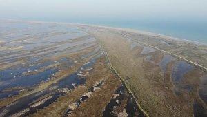 Kızılırmak Deltası'nda ikinci risk: Deniz suyu!