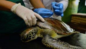 Yaralı yeşil deniz kaplumbağası tedaviye alındı