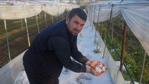 Çeşme'de hortum felaketinin ardından Urla'yı dolu vurdu: Seralar delik deşik