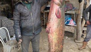 Balıkçıların oltasına 2 metre 20 santimlik yayın balığı takıldı
