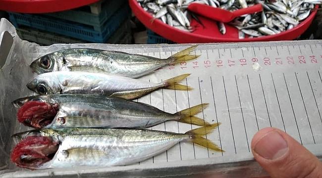 Balıklar boy boy denetleniyor