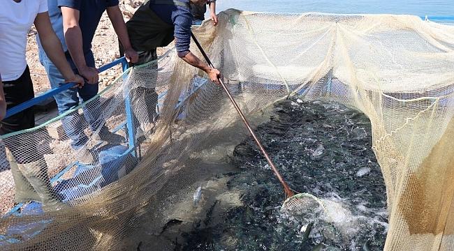 Denize kıyısı olamayan kentten Türkiye'ye yıllık 20 bin ton alabalık
