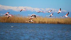 Flamingoların gökyüzü dansı