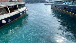 İstanbul Boğazı yine denizanası istilasına uğradı