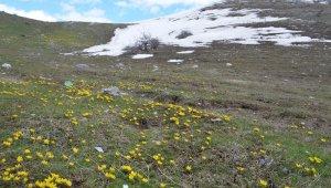 Metrelerce kar yerini çiçek bahçelerine bıraktı