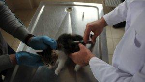 Sahiplenilen hayvanların bir yıllık muayenesi ücretsiz yapılıyor