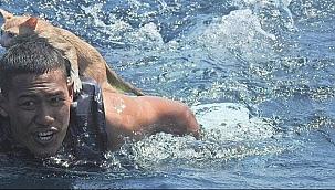 Tayland donanması'ndan denizciler 4 kediyi yanan gemiden kurtardı!