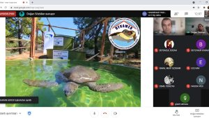 Karacasu'da deniz kaplumbağaları anlatıldı!