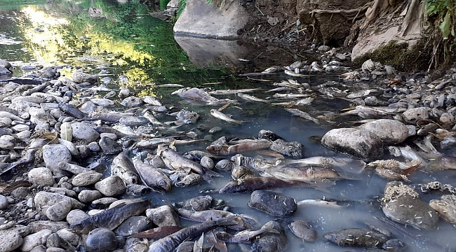 Osmaniye'de toplu balık ölümleri tedirginliğe yol açtı!