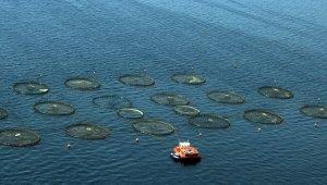 Pandemide Muğla'dan 410 milyon dolarlık balık ihracatı