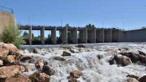 Ceyhan Nehri'nin yüzeyi ölü balıklarla kaplandı!