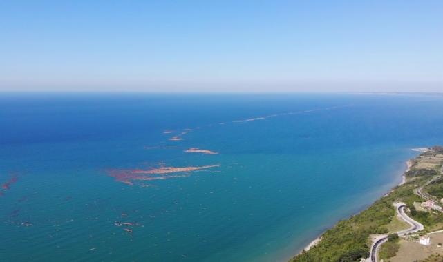 Karadeniz'de tomruk adacıkları oluştu!