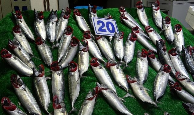 Karadeniz'de bolluk balıkçıların yüzünü güldürdü!