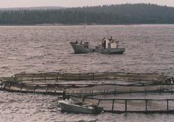 Çeşme'de balık çiftliği kavgası