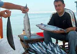 Balık fiyatları bu yıl yüksek seyrediyor