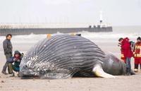 1000 balina ava kurban gidecek