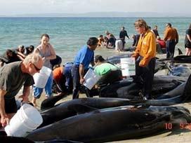 Balinalar karaya vurdu