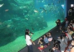 Dev akvaryumda 30 bin su canlısı var