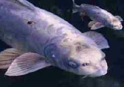 Bu balıklar insana benziyor